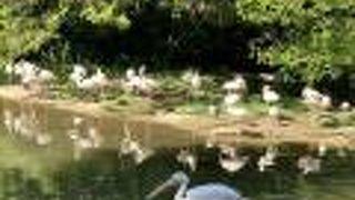 リヨン動物園
