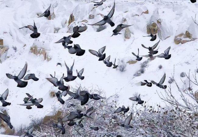 鳩がたくさんいるから鳩の谷。グリーンツアーで訪れました。