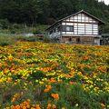 日本の原風景に触れる