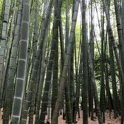竹林の庭で有名