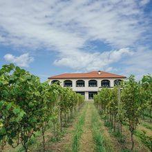 Winerystay TRAVIGNE