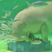 朝一が吉‼︎ 自由に回れる水族館