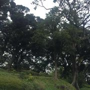 丘陵の公園