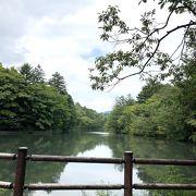 緑豊かな雲場池で森林浴