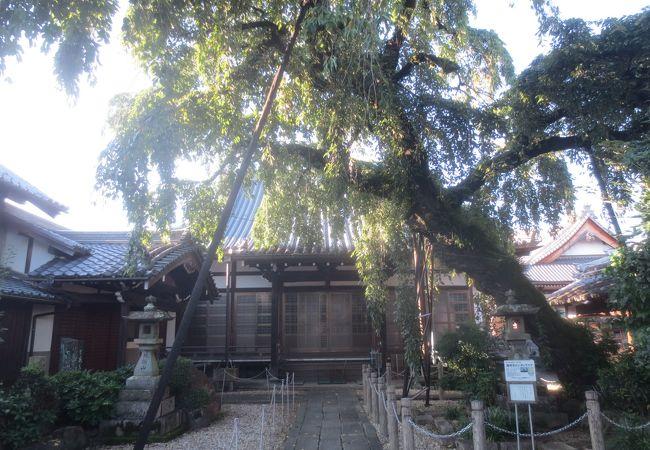 枝垂桜が有名