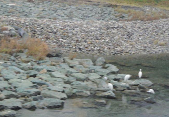 河川敷の緑の石