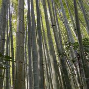 竹林が見事