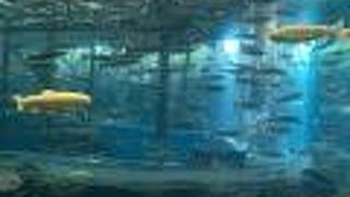 山梨県立富士湧水の里水族館(森の水族館)