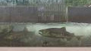 豊浦町インディアン水車公園