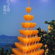 松山はみかんもバスもオレンジ色