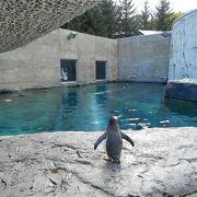 動物の自然と接する動物園