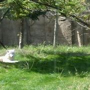 必見!北極オオカミ・スナネコ・マヌルネコ・バードショー