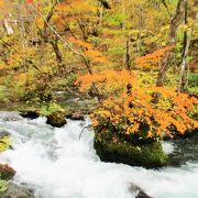 十和田八幡平国立公園 奥入瀬渓流紅葉 真っ盛り