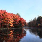 水面に映る紅葉がきれい