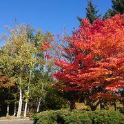 秋の一日を満喫