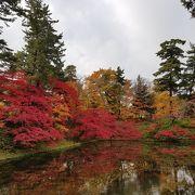紅葉が本当に綺麗でした。