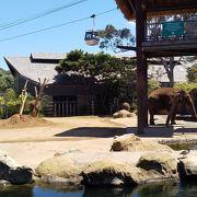 シドニーの街からフェリーで行く動物園