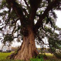 熊本城公園 写真