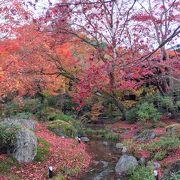 「獅子吼の庭」の紅葉