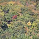 白神山地 (秋田県)