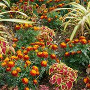 青島手前の亜熱帯植物園は無料で