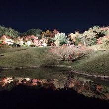 朱雀の庭/いのちの森
