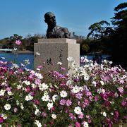 十一月中旬でしたが、バラとコスモスが見られました。ぼたん苑のあるところでは紅葉とツワブキが楽しめました