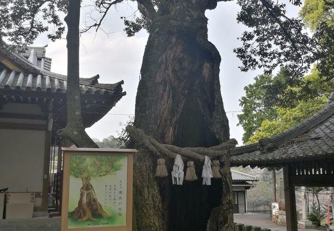 竈門 神社 八幡