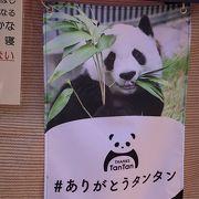 神戸には20年間パンダがいました…まもなくさよならタンタン