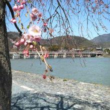 嵐山公園 (中ノ島地区)