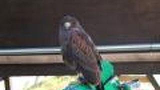 西海国立公園 九十九島動植物園 森きらら