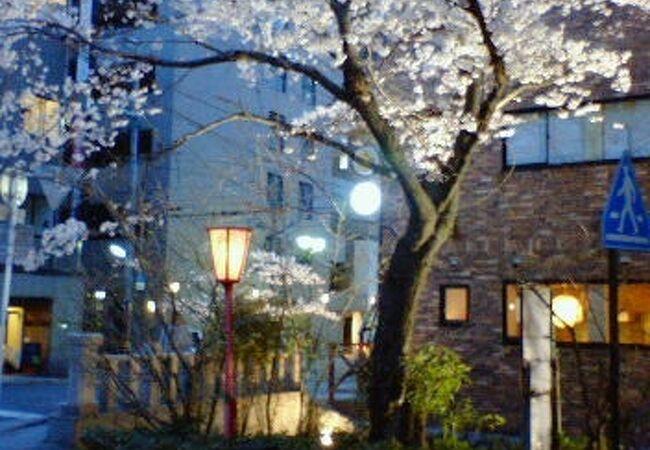 桜の時期は赤いぼんぼりでライトアップされた夜桜を楽しめます
