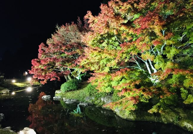 速報 栗林公園のライトアップ 2020/11/25