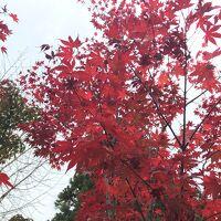 観光タクシーで訪れた南禅寺の紅葉