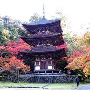 紅葉と不断桜の競演が見られました。