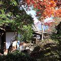 白雲洞茶苑