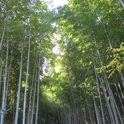 有名な竹林の道