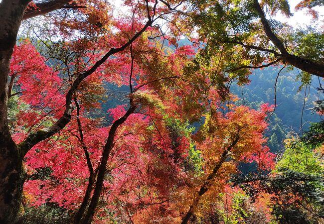 自然の紅葉を楽しんだ