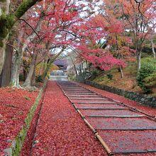 勅使門前の散紅葉