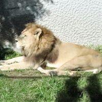 平川動物公園 写真