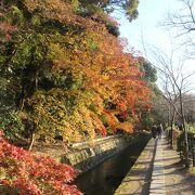 紅葉も美しい道です