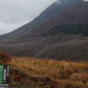 久住連峰の絶景が見られるが、木道以外での湿原観察には、長靴を用意した方が安心。