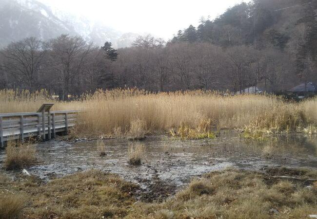 気持ちの良い湿原