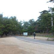 道の駅ことひきがある青松がきれいな海岸の公園