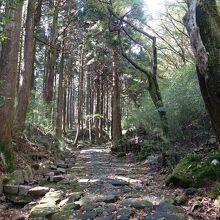 須雲川自然探勝歩道