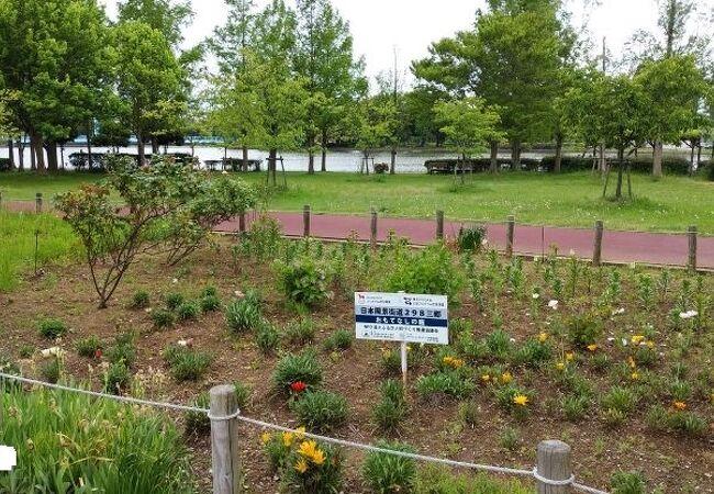 県営みさと公園