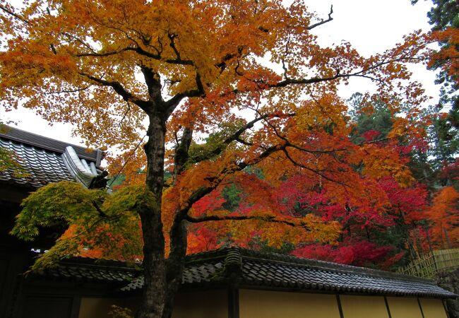 名勝蓬莱庭周辺や三重塔周辺の紅葉がきれいでした。不断桜が咲いていました。