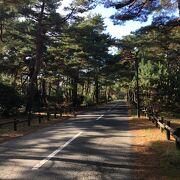 日本三大松原の一つ!アカマツとクロマツが入り混じる風景