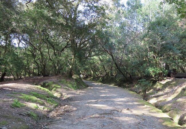 春日大社とともに世界遺産に指定された森