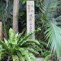 天然記念物のヤエヤマヤシ